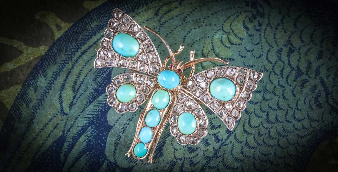 Antique Insect Butterfly