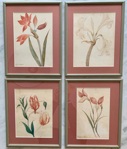 Set of four botanical watercolour paintings on paper (artist: unknown)
