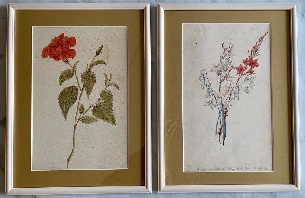 Pair of botanical watercolour paintings (artist: unknown)