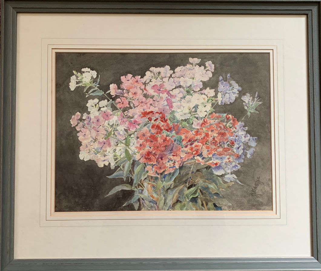 Watercolour painting on paper: Phlox (artist: Annie Keen)