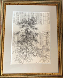 Pencil on paper drawing: Riviera palm (artist Joanne Brogden RA 1929-2013)