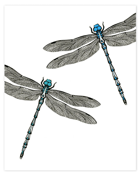 A print of a hand-drawn ink illustration of two dragonflies, one with blue highlights and one with teal accents. Shown on a white background.
