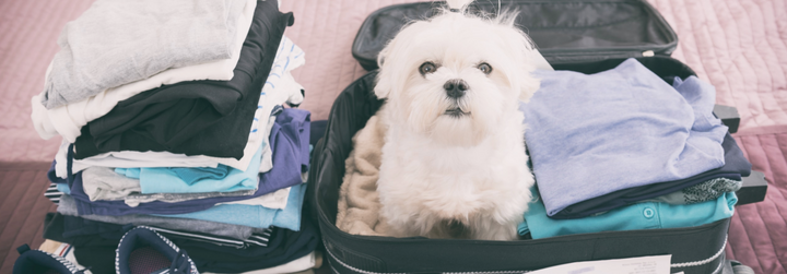 Tips for Airbnb-ing with Your Dog