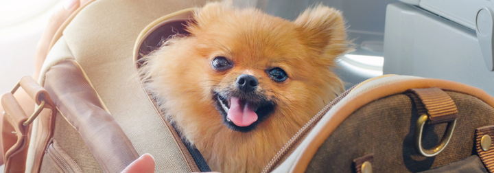How To Fly With Pets: What To Pack In Their Carry-On