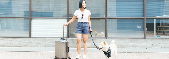 Pet Travel: How do top US airlines compare?