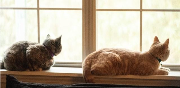 calm cats in a window cat socialization