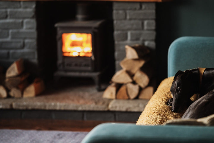 Your Pet Fire Preparedness Plan