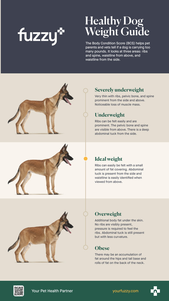 Dog body condition score, healthy dog weight guide