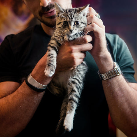 playful kitten being held by man