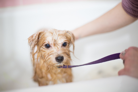 puppy getting bath to protect skin