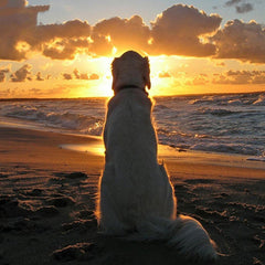 Hond in de horizon