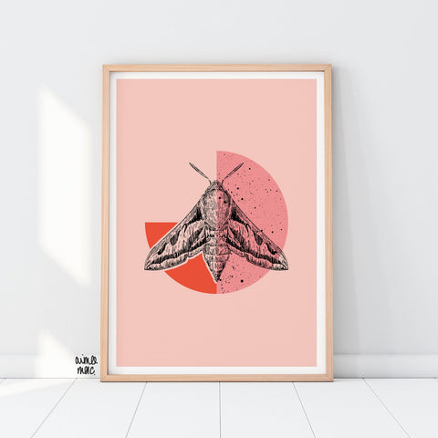 Pink Hawk Moth Print - A4 - Loola Loves UK