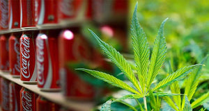 Coca Cola in talks with Aurora as they eye the cannabis market