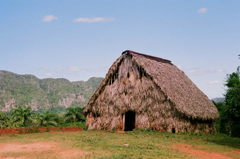 vinales cuba tobacco house analogue film