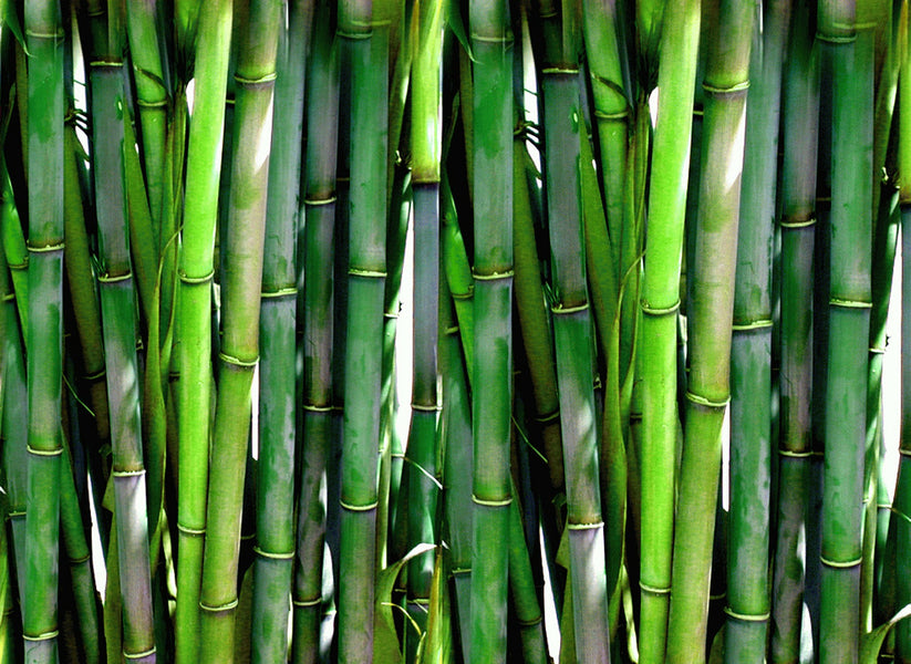 Bamboo vs Cotton- which fabric to buy