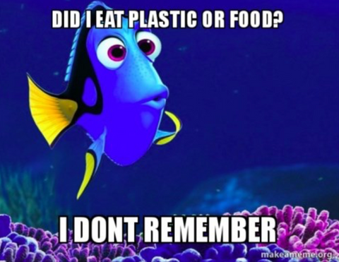 Plastic or Food?