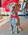Dapper Dog Bow Tie - Red & White Hearts