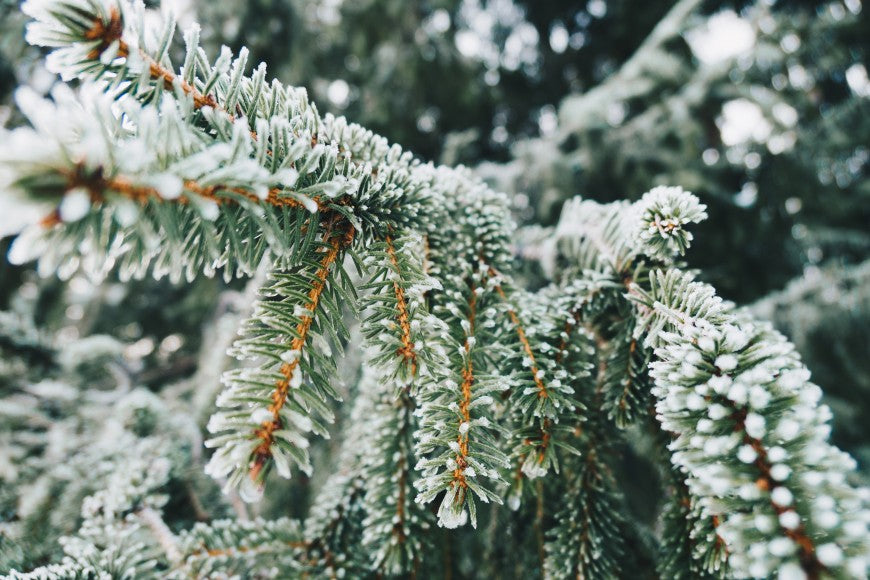 Eco-friendly activities that will help you beat the winter blues