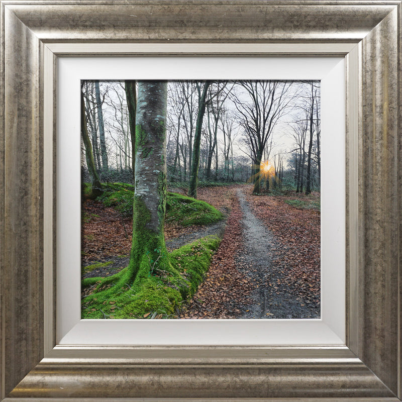 WINTER WOODLAND WALK | ORIGINAL OIL PAINTING