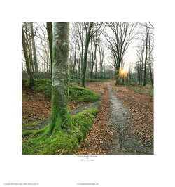 """Winter Woodland Walk"" Open edition print"