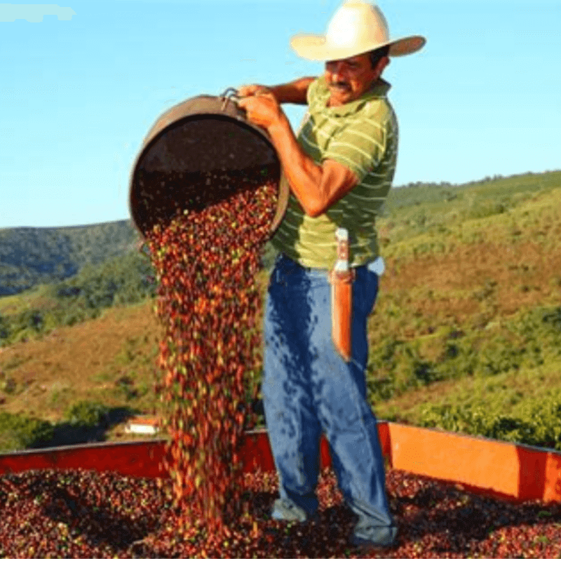Brazil Chapada de Minas -Medium Roast- 16oz