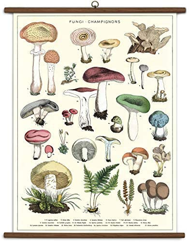Mushroom Wall-Hanging School Chart *FOR PORCH PICK-UP ONLY* UNABLE TO SHIP