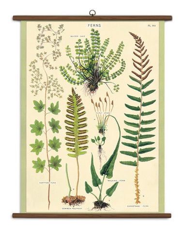 Ferns Wall-Hanging School Chart *FOR PORCH PICK-UP ONLY* UNABLE TO SHIP