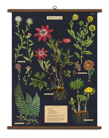 Herbarium Wall-Hanging School Chart *FOR PORCH PICK-UP ONLY* UNABLE TO SHIP