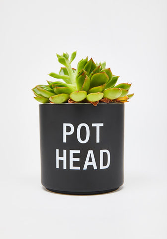 Pot Head Planter - UNABLE TO SHIP