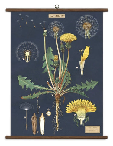 Dandelion Wall-Hanging School Chart *FOR PORCH PICK-UP ONLY* UNABLE TO SHIP