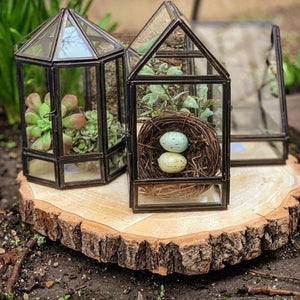 Mini Terrariums - Multiple Designs