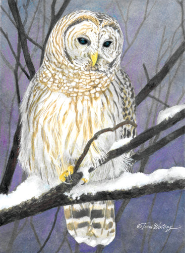 Barred Owl - Watercolor