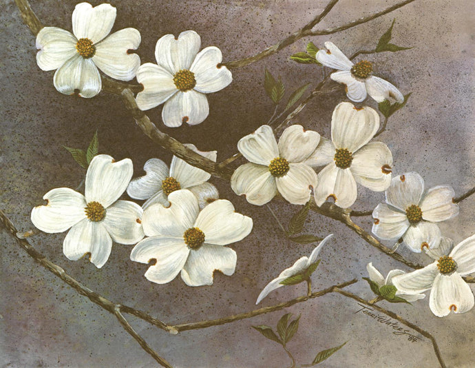 Dogwood - Watercolor