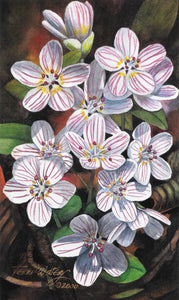 Spring Beauties II - Watercolor