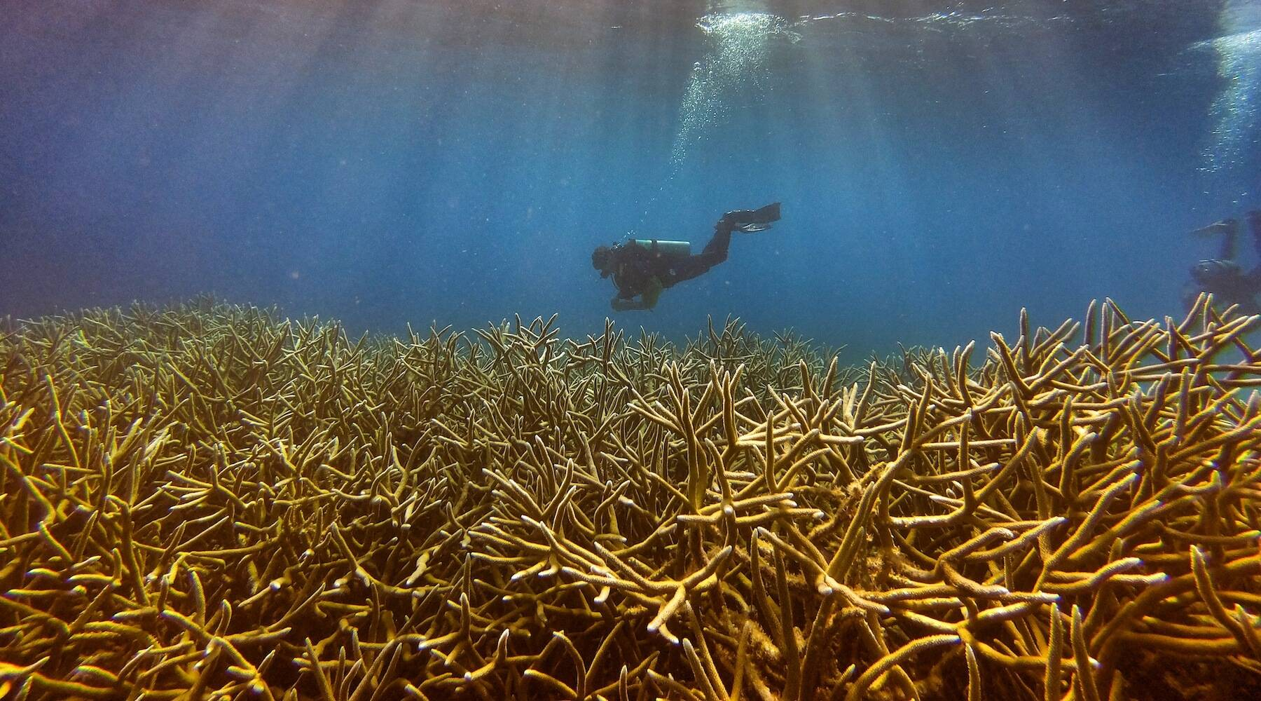 Standing Up For Coral