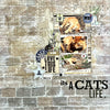 It's a Cats Life - Lydell Quin