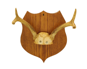 Antlers on plaque