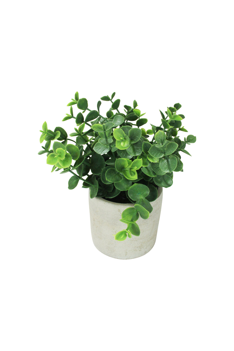 Boxwood Planter