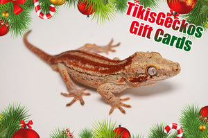 Spread Holiday Cheer with a TikisGeckos Gift Card!
