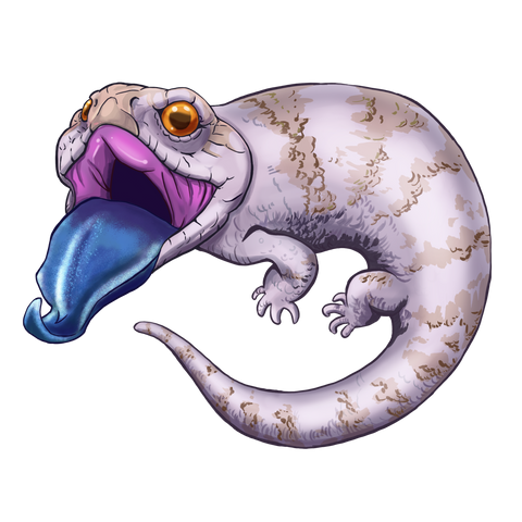 White Blue Tongue Skink Stickers/Decals