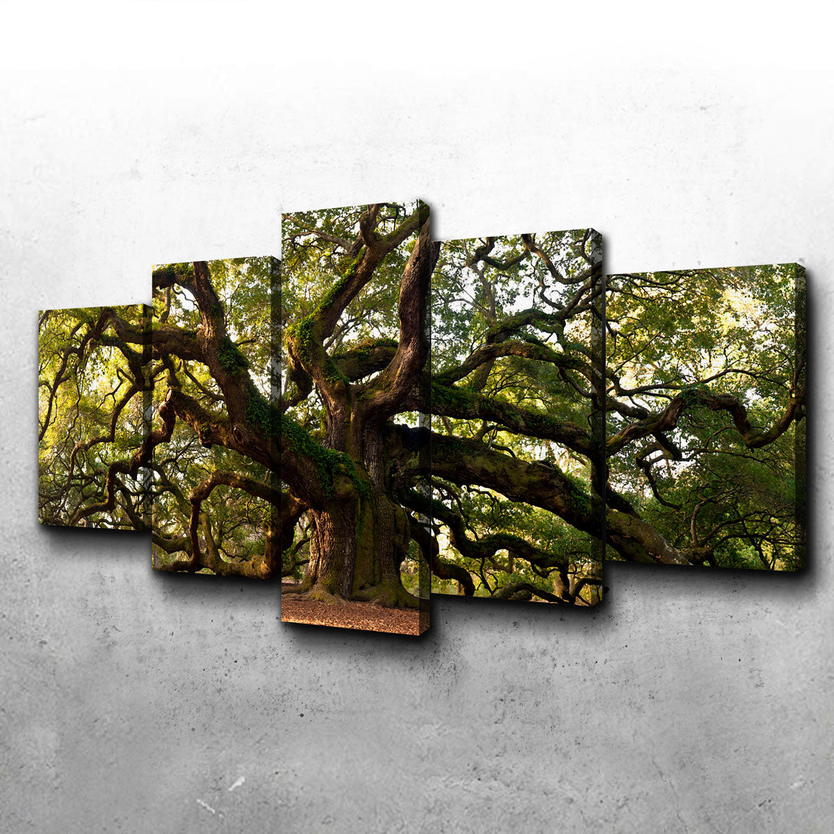 Charleston Angel Oak Canvas Set