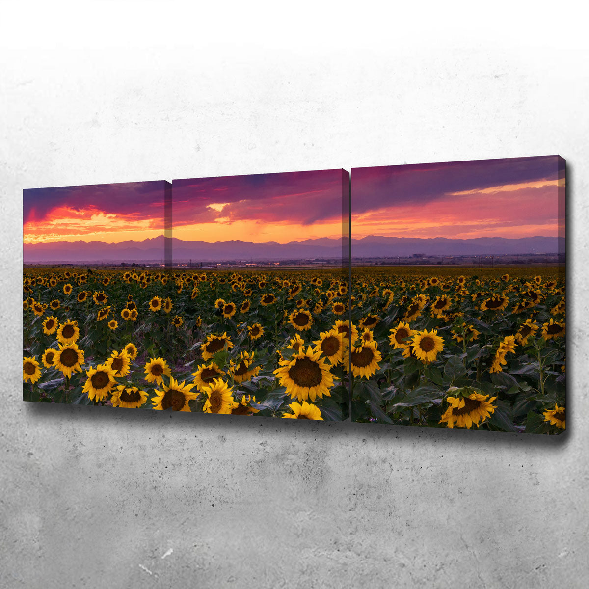 Colorado Sunflowers Canvas Set