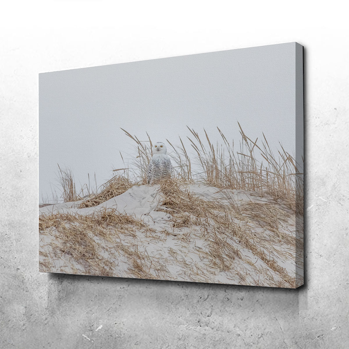 Snowy Owl Canvas Set