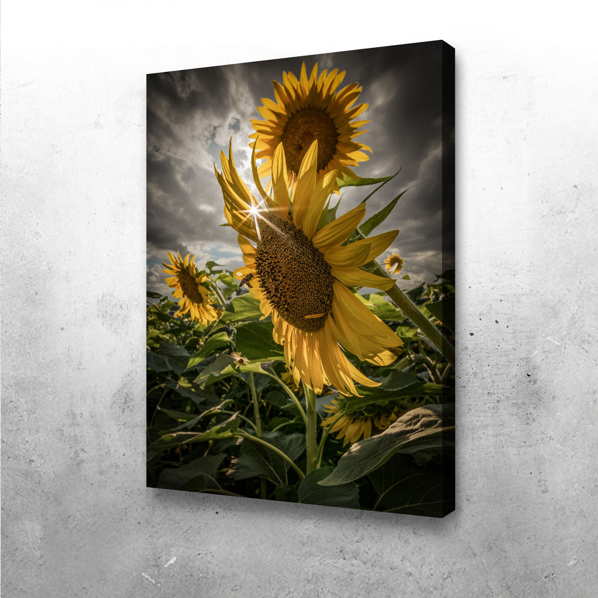Cloudy Sunflowers