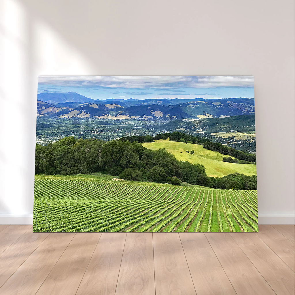 Rolling Hills and Vineyards of Sonoma County