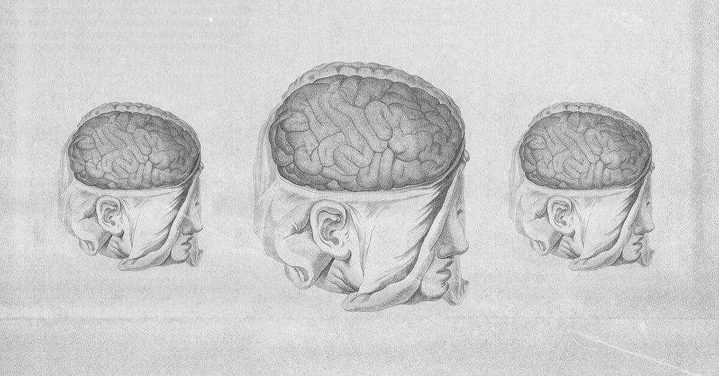 Healing Traumatic Brain Injuries with Psychedelics
