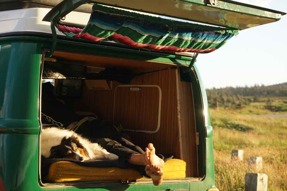 Van camping with a dog