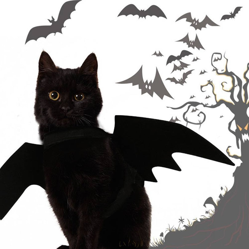 Halloween cat bat wings