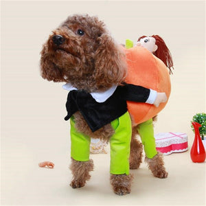 Pet carrying pumpkin costume