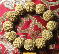 Wrist mala in rudraksha to 5 facets.